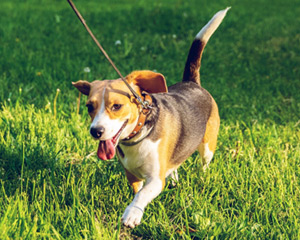 dog walker wichita