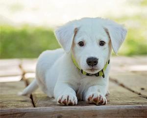 puppy sitter Wichita