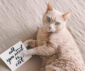 cat sitter Wichita